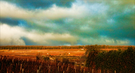 vineyards-burgundy